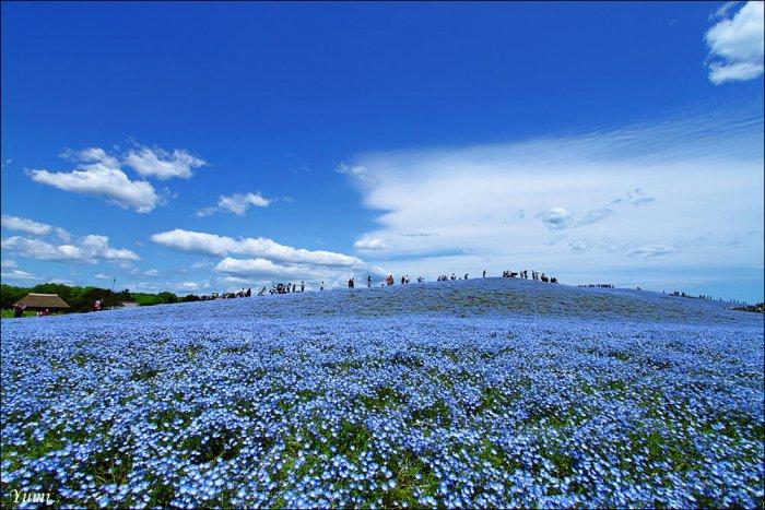 parc national de hitachi au japon 023 Parc national de Hitachi au Japon (14 photos)