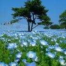 thumbs parc national de hitachi au japon 024 Parc national de Hitachi au Japon (14 photos)