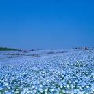 thumbs parc national de hitachi au japon 030 Parc national de Hitachi au Japon (14 photos)