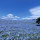 thumbs parc national de hitachi au japon 032 Parc national de Hitachi au Japon (14 photos)