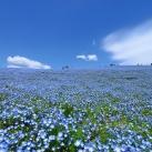 thumbs parc national de hitachi au japon 034 Parc national de Hitachi au Japon (14 photos)