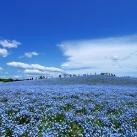 thumbs parc national de hitachi au japon 035 Parc national de Hitachi au Japon (14 photos)