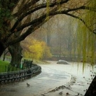 thumbs proposition romantique sous la pluie 001 Proposition romantique sous la pluie (9 photos)