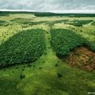 thumbs pub wwf 028 Publicité WWF (41 photos)