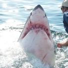 thumbs lamitie entre un homme et un requin 1 2 Lamitié entre un homme et un requin (7 photos)