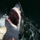 thumbs lamitie entre un homme et un requin 1 3 Lamitié entre un homme et un requin (7 photos)