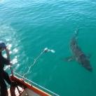 thumbs lamitie entre un homme et un requin 1 4 Lamitié entre un homme et un requin (7 photos)