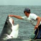 thumbs lamitie entre un homme et un requin 1 5 Lamitié entre un homme et un requin (7 photos)