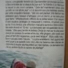 thumbs lamitie entre un homme et un requin 1 6 Lamitié entre un homme et un requin (7 photos)