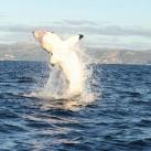 thumbs lamitie entre un homme et un requin 1 7 Lamitié entre un homme et un requin (7 photos)