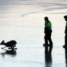 thumbs sauvetage de deux faons 009 Sauvetage de deux faons coincés sur un lac gelé (10 photos)